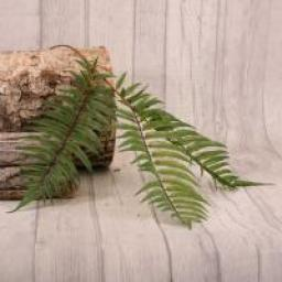 Boston Fern Spray Bunch of 3
