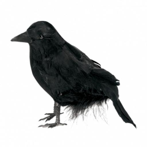 Small Feathered Raven