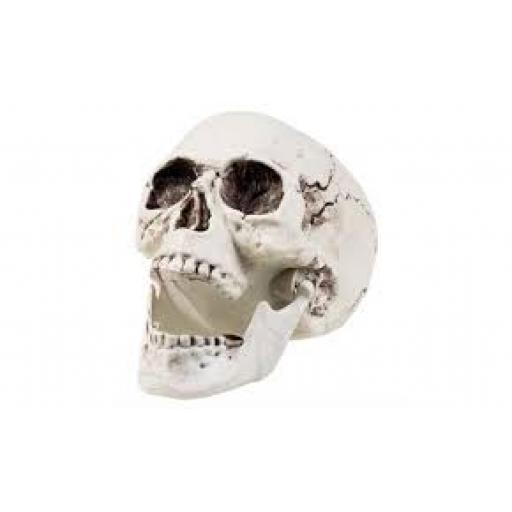 Skull with Moveable Jaw Halloween Decoration