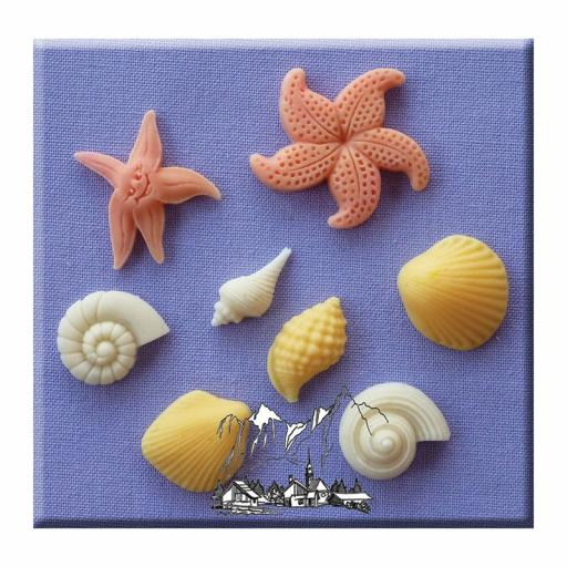Shells & Starfish Mould By Alphabet Moulds
