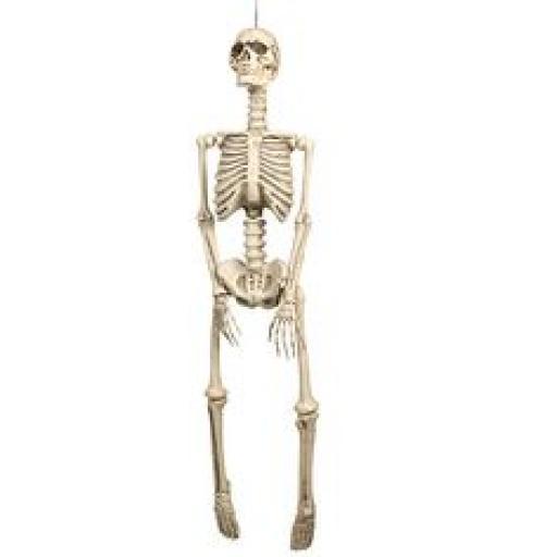 Skeleton 92cm